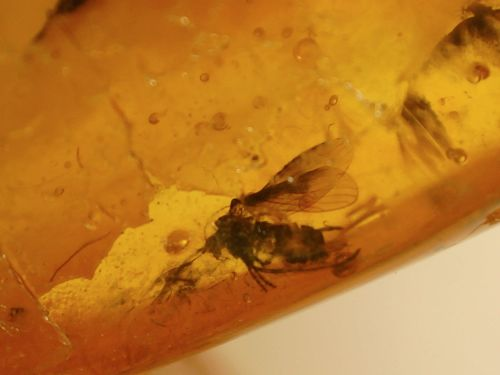 Baltic Amber #BA10 - Multiple Winged Insect Inclusions
