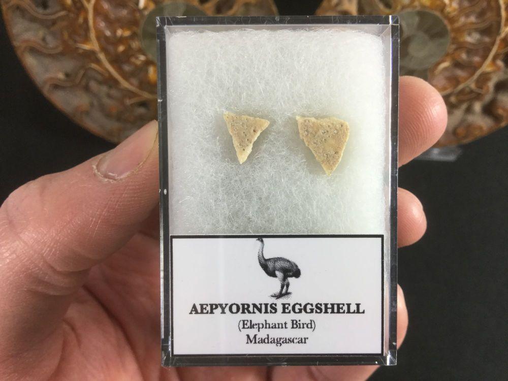 Aepyornis Eggshell #01