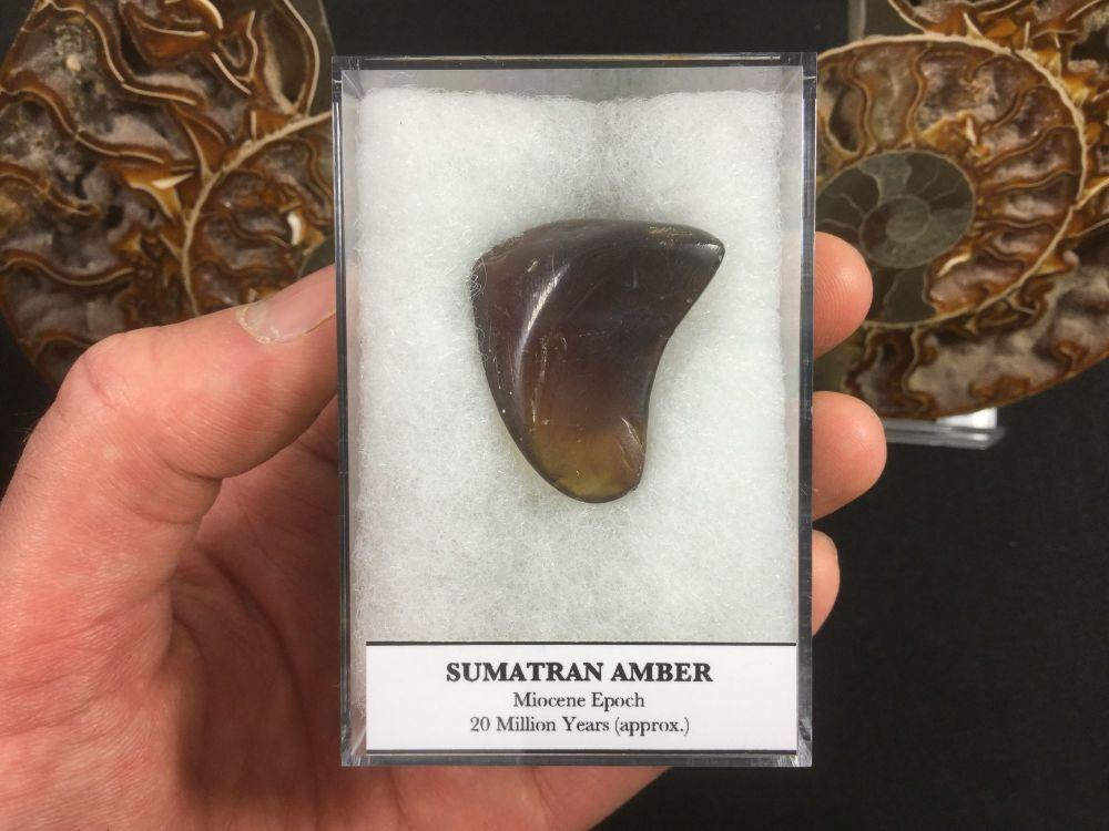 Sumatran Blue Amber (Miocene)