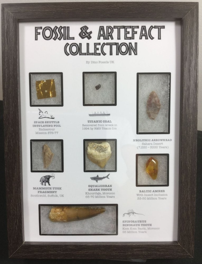 Fossil & Artefact Collection (Framed) #01