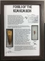 Kem Kem Fossil Collection (Framed) #01