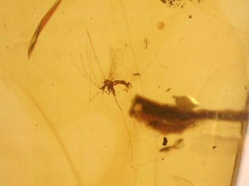 Burmite Amber with Insect Inclusion #BUR11