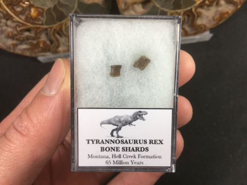 Tyrannosaurus Rex Bone Shards #06
