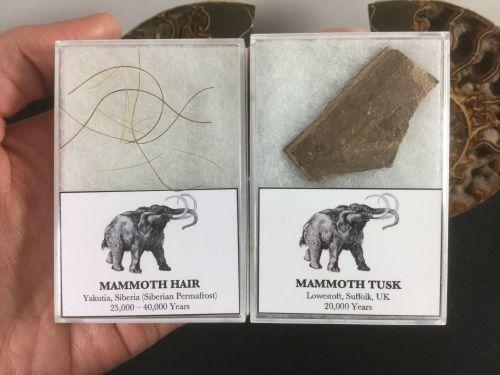 Mammoth Set, Tusk & Hair #02