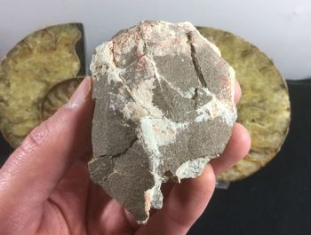 Titanosaur Sauropod Egg (partial)