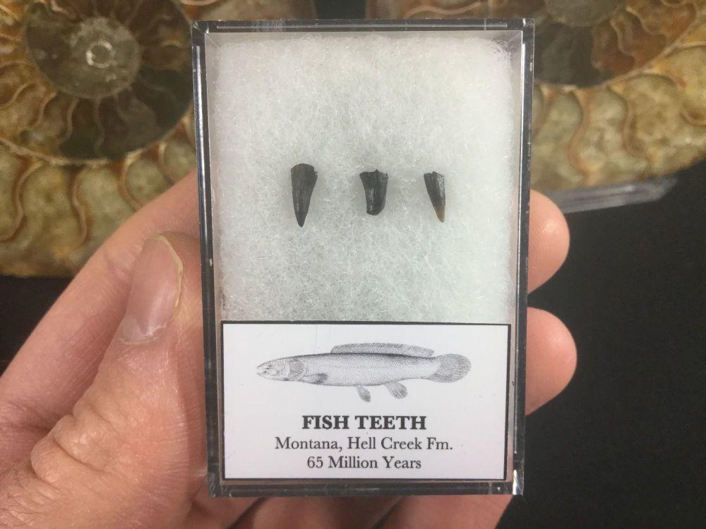 Fish Teeth, Hell Creek #05