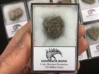 Dinosaur Bone (Jurassic, Utah)