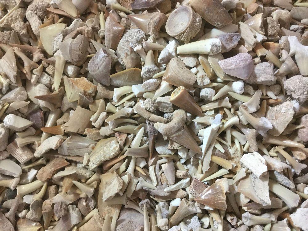 1kg Khouribga Fossil Mix