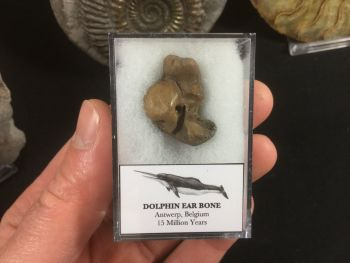 Dolphin Ear Bone #02