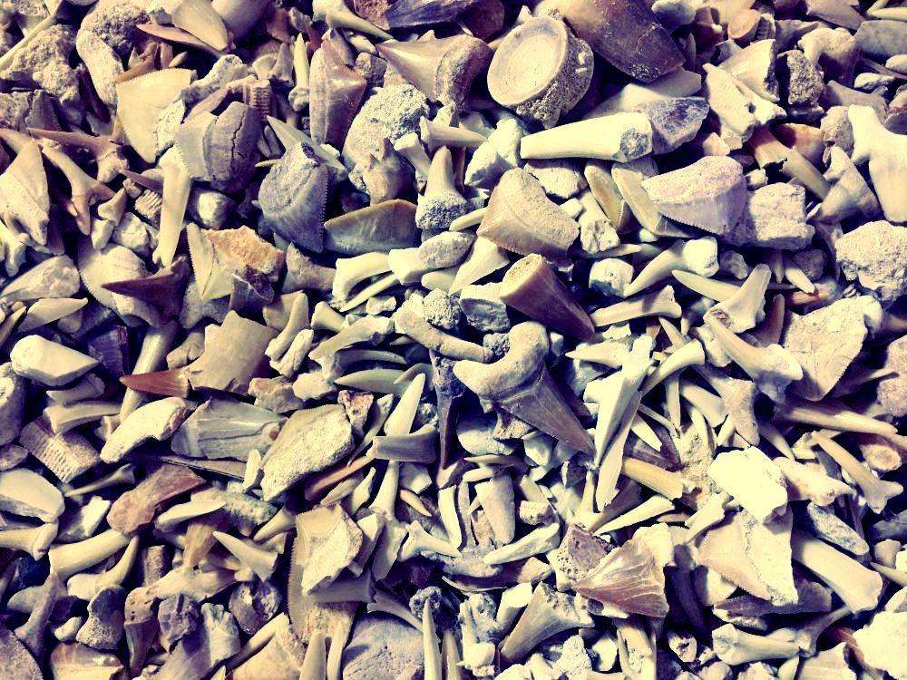 Wholesale/Bulk Fossils
