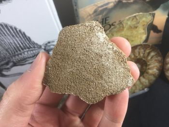 Large Saltasaurus Sauropod Eggshell #03