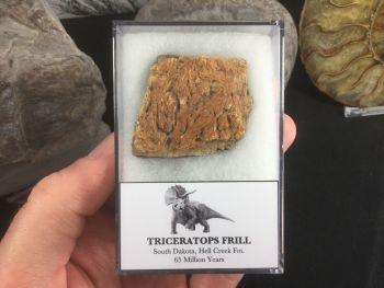 Triceratops Frill #01