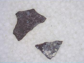 Maiasaura Hadrosaur Eggshell #12