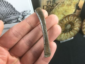 Plesiosaur Rib, South Wales #01