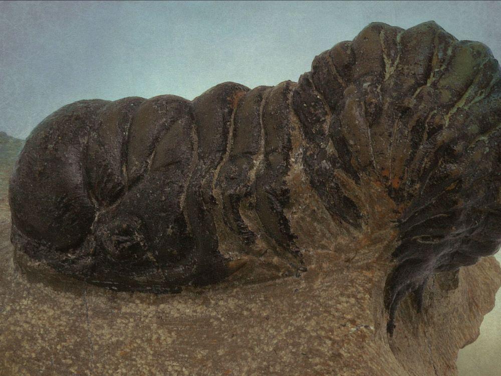 Crotalocephalus