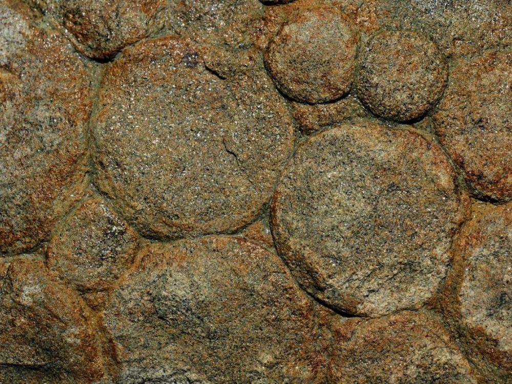 Pre-Cambrian Fossils