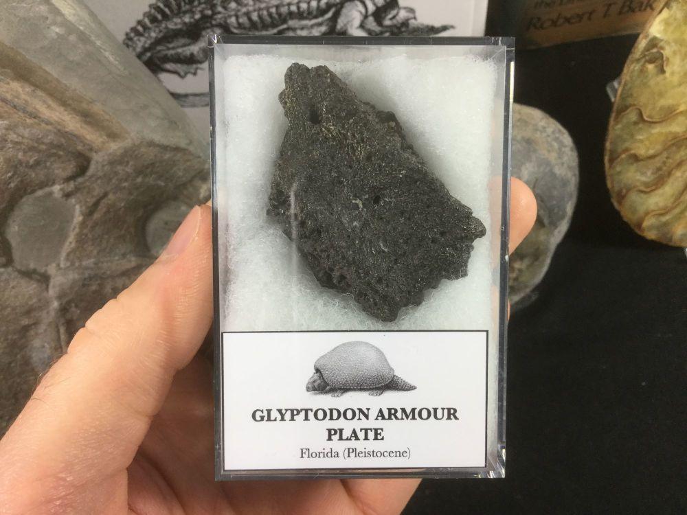 Glyptodon Plate #06