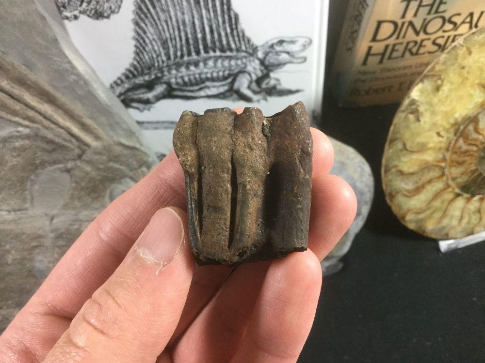 Horse Tooth, Florida #01
