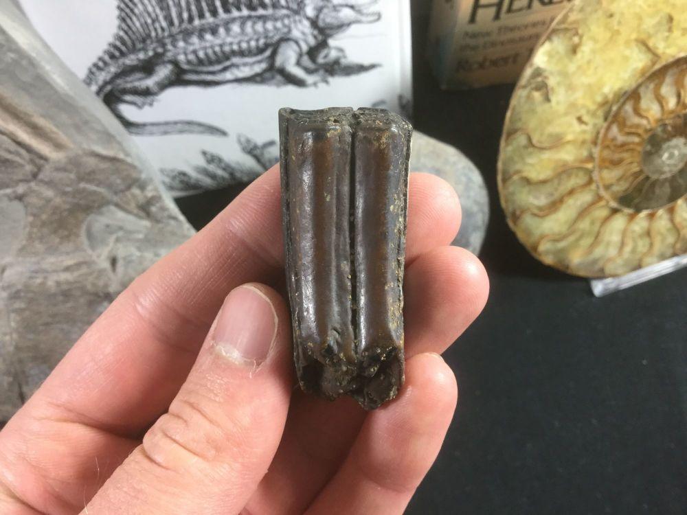 Horse Tooth, Florida #04