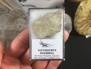 Saltasaurus Sauropod Eggshell #02