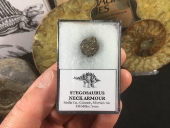 Stegosaurus Neck Scute (Armour Plate) #09