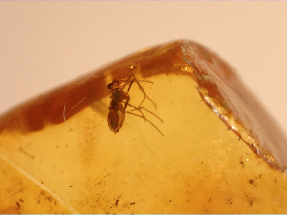 RARE New Jersey Amber with Blood Sucking Nematocera Inclusion