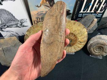 Mammoth Tusk #28