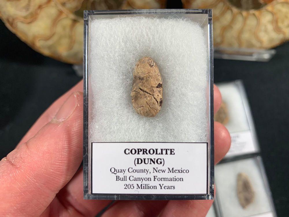 Triassic Coprolite (New Mexico, Bull Canyon Fm.)