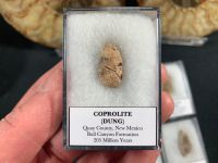 Triassic Coprolite (New Mexico, Bull Canyon Fm.)