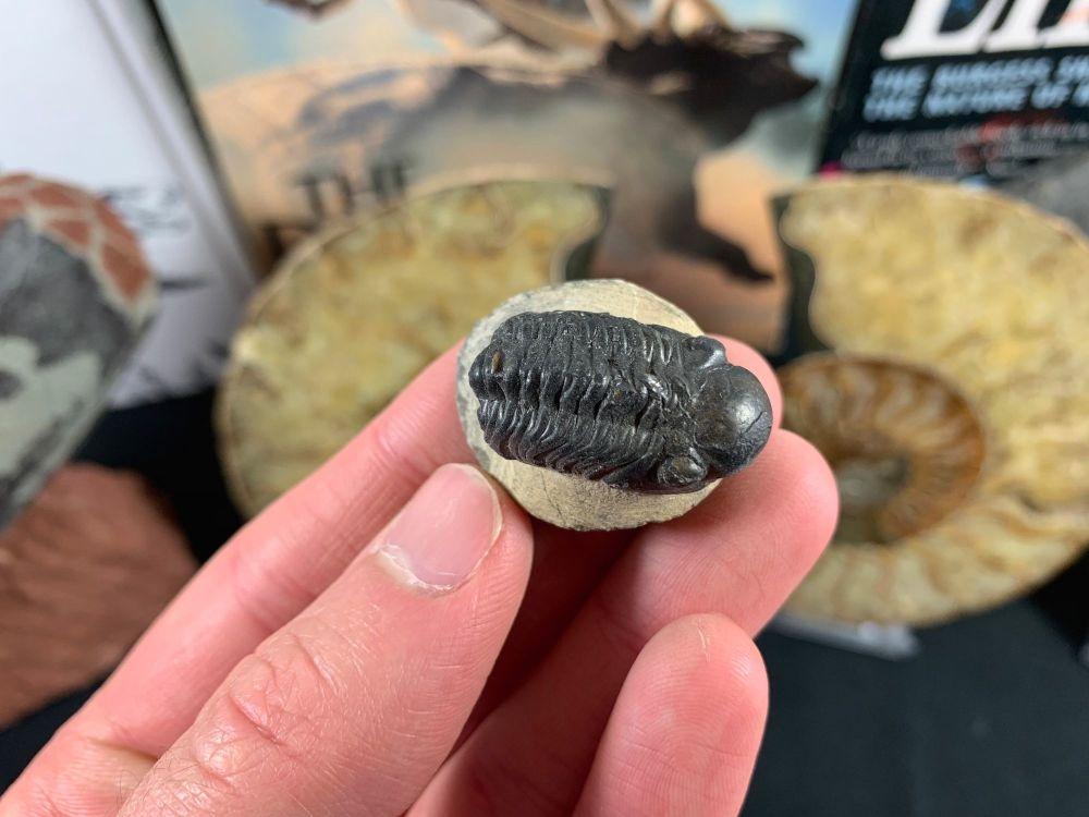 Reedops Trilobite #29