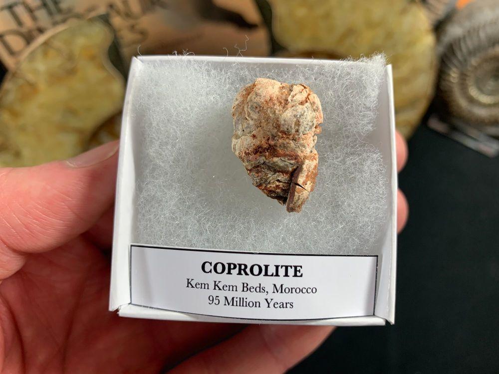 Coprolite (dung), Kem Kem #01