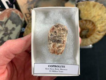 Coprolite (dung), Kem Kem #02