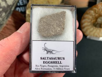 Saltasaurus Sauropod Eggshell #09