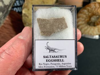 Saltasaurus Sauropod Eggshell #21