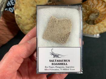 Saltasaurus Sauropod Eggshell #40