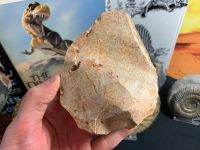 Palaeolithic Hand Axe (Draa Valley, Morocco) #02