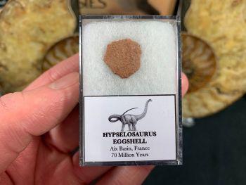 Hypselosaurus Sauropod Eggshell #07