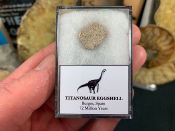Titanosaur Sauropod Eggshell, Spain #02