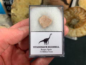 Titanosaur Sauropod Eggshell, Spain #04