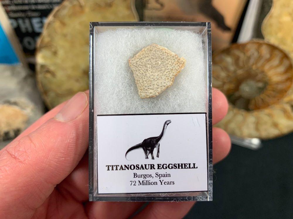 Titanosaur Sauropod Eggshell, Spain #06
