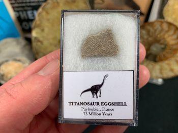 Titanosaur Sauropod Eggshell, France #07