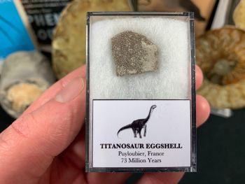 Titanosaur Sauropod Eggshell, France #12