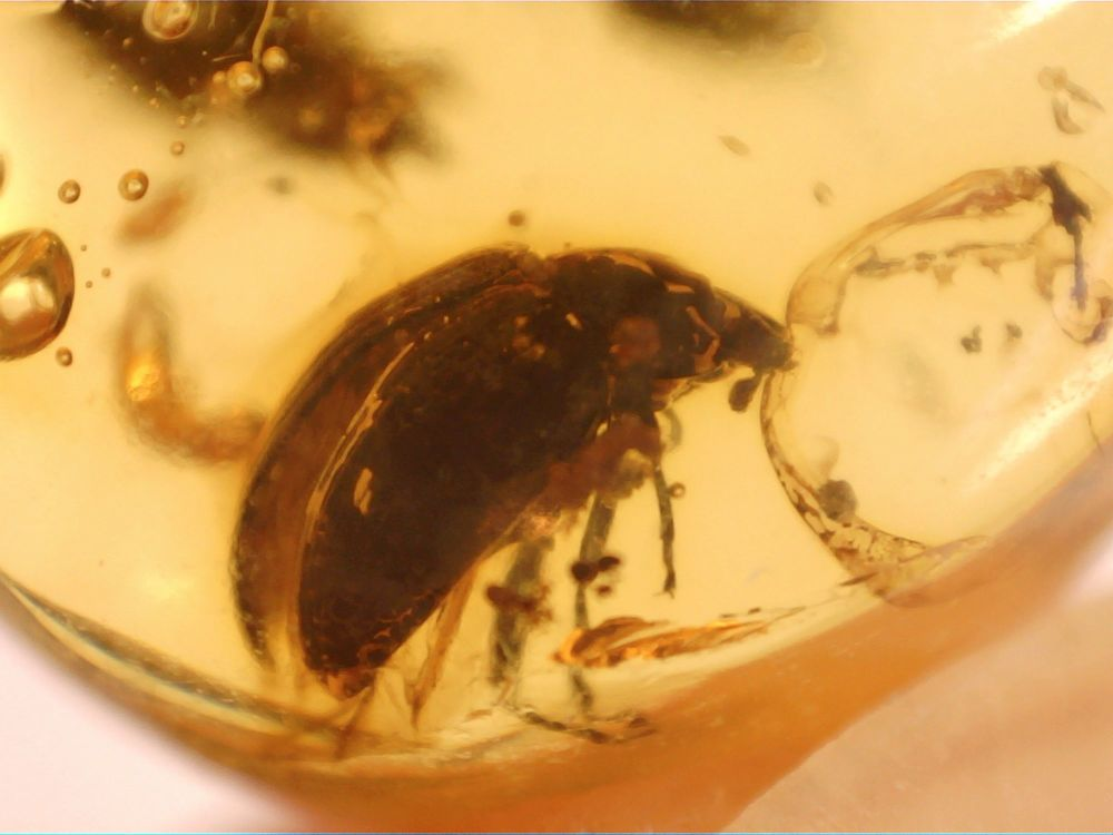 Dominican Amber Inclusion #39 (Beetle)