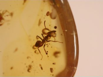 Dominican Amber Inclusion #47 (Ant)