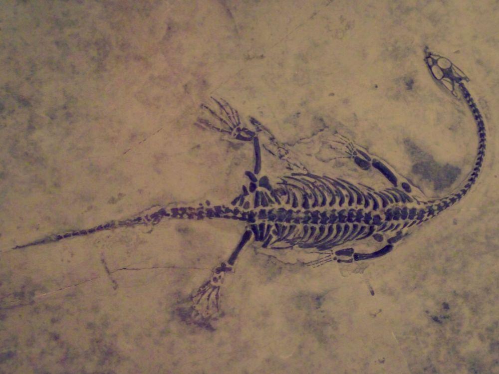 Keichousaurus hui