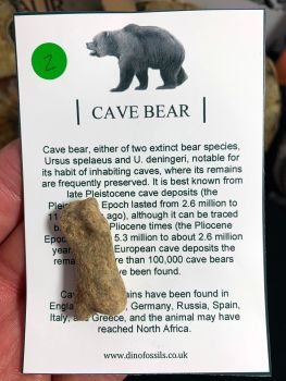 Cave Bear Digit #02
