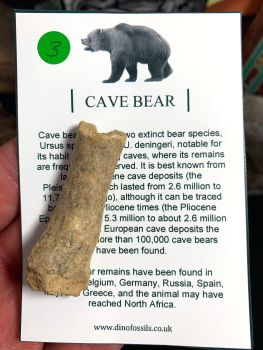 Cave Bear Digit #03