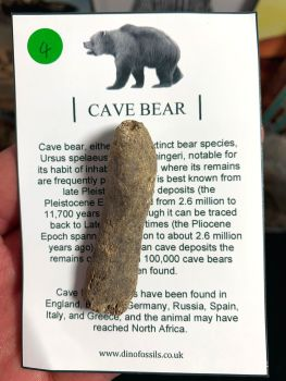 Cave Bear Digit #04