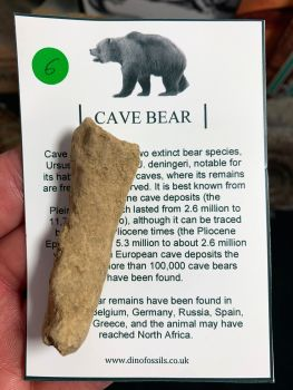 Cave Bear Digit #06