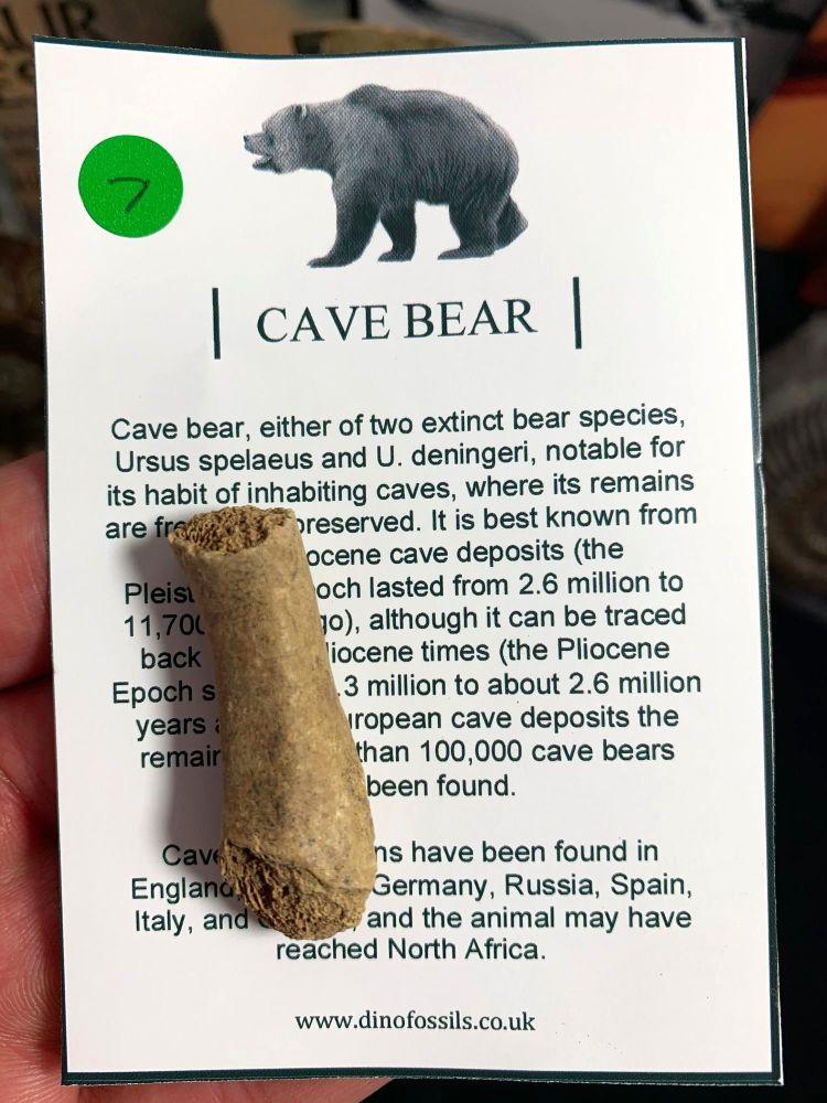 Cave Bear Digit #07